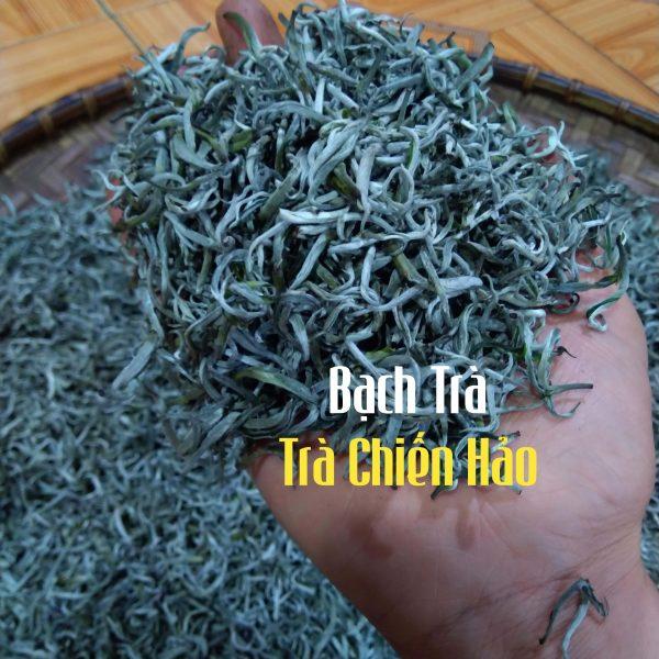 sản xuất bạch trà ở trà chiến hảo
