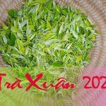 Trà Xuân 2021 thơm mới