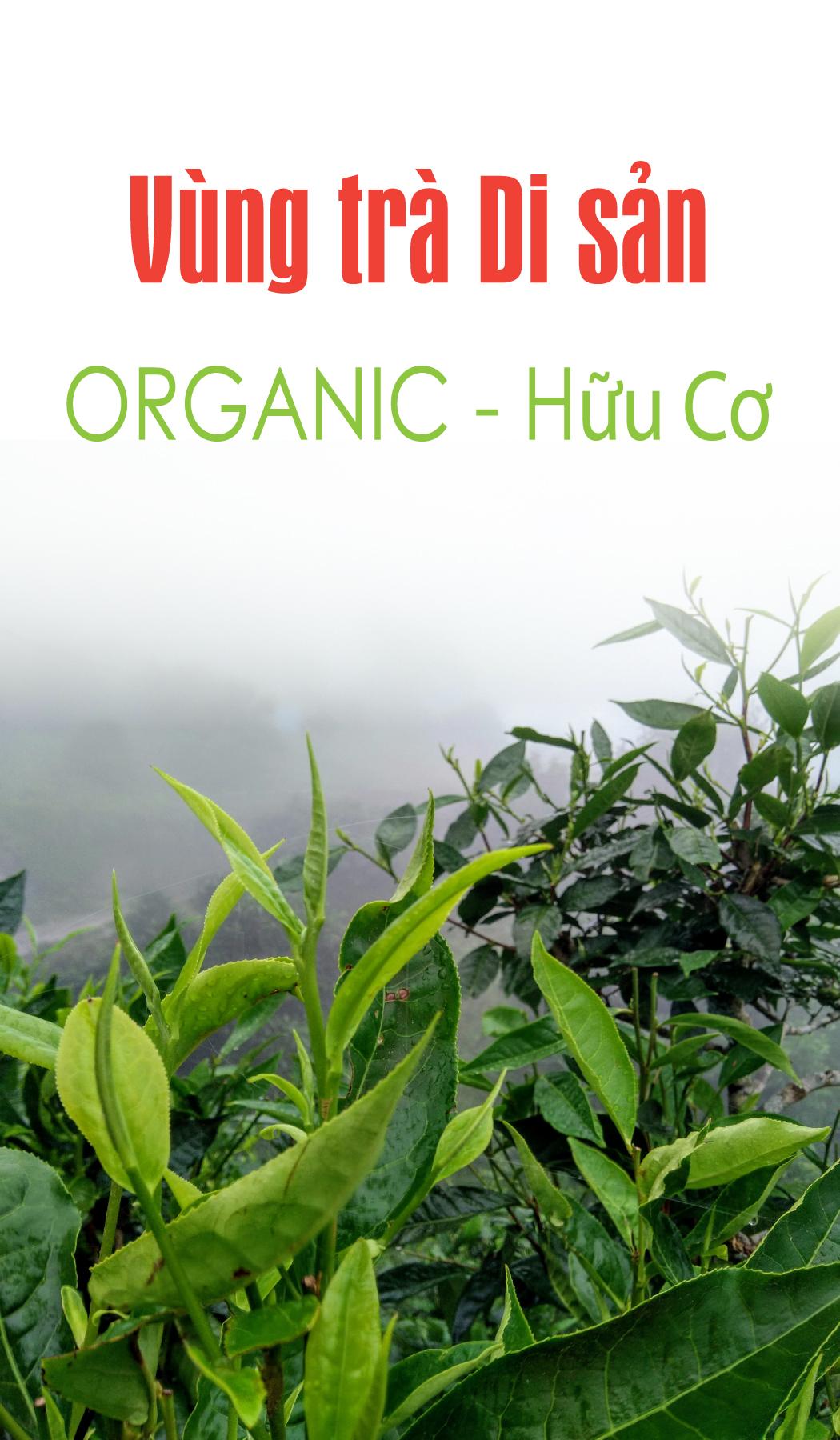 Vùng trà hữu cơ