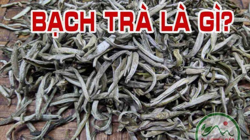 Bạch trà là gì? Tại sao chỉ có trà shan tuyết mới làm ra bạch trà?